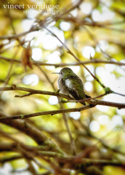 Picture of our resident hummingbird pinched from the mister's facebook page :)